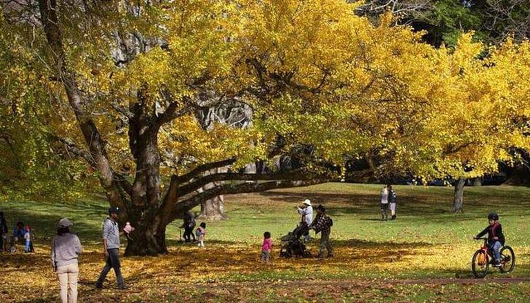 New Zealand Records its Warmest Southern Winter Ever